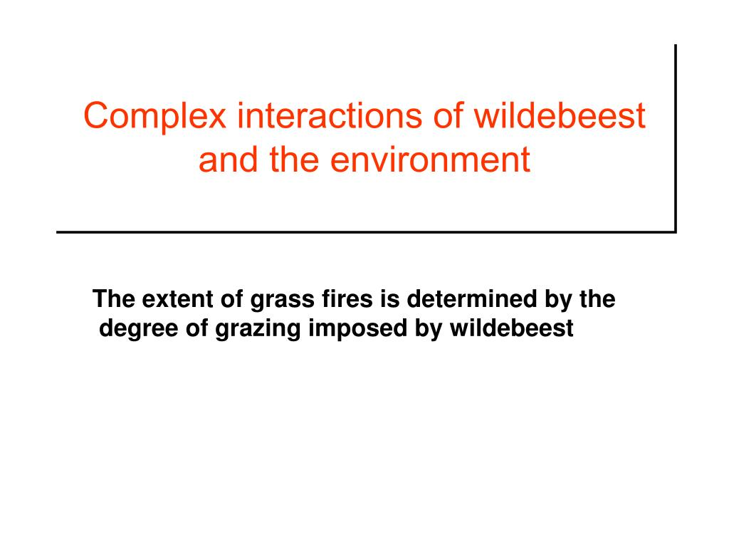 Complex interactions of wildebeest and the environment