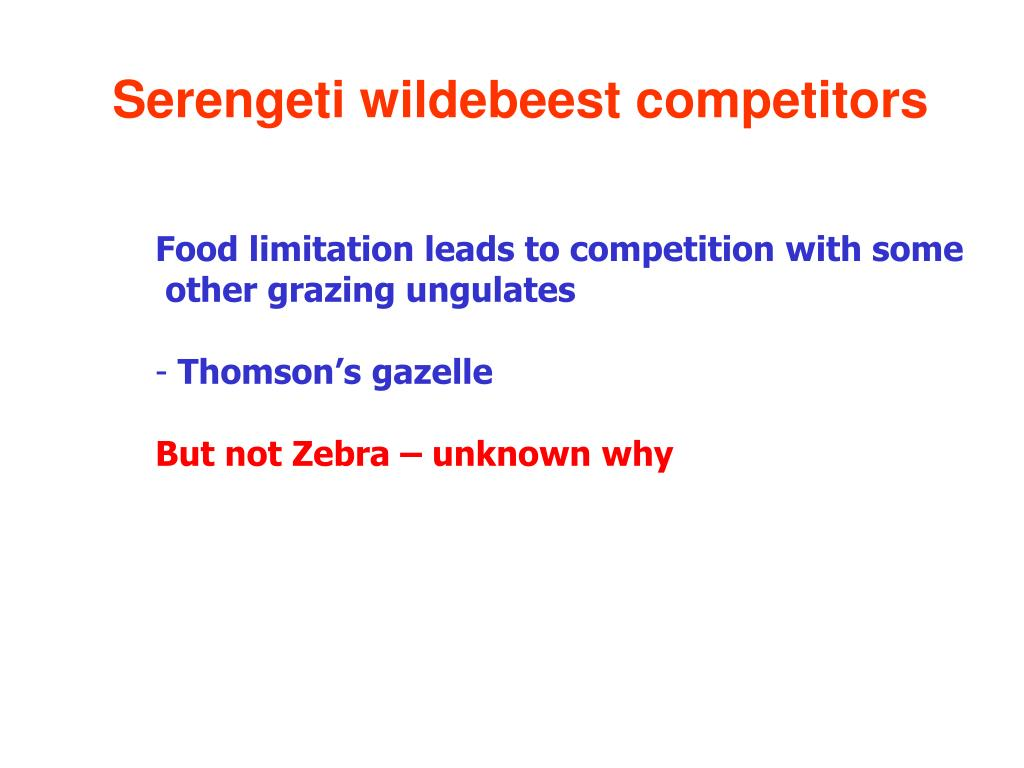 Serengeti wildebeest competitors
