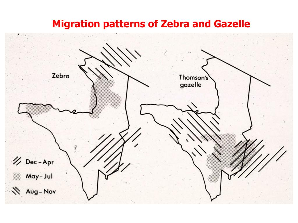 Migration patterns of Zebra and Gazelle