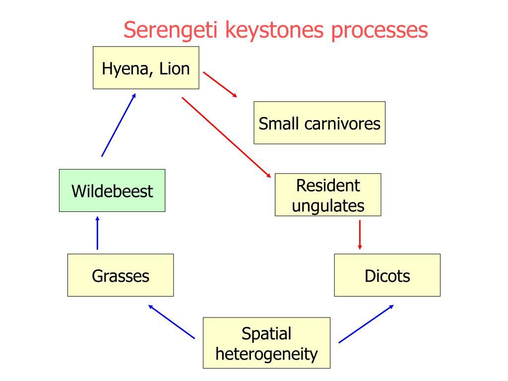 Serengeti keystones processes