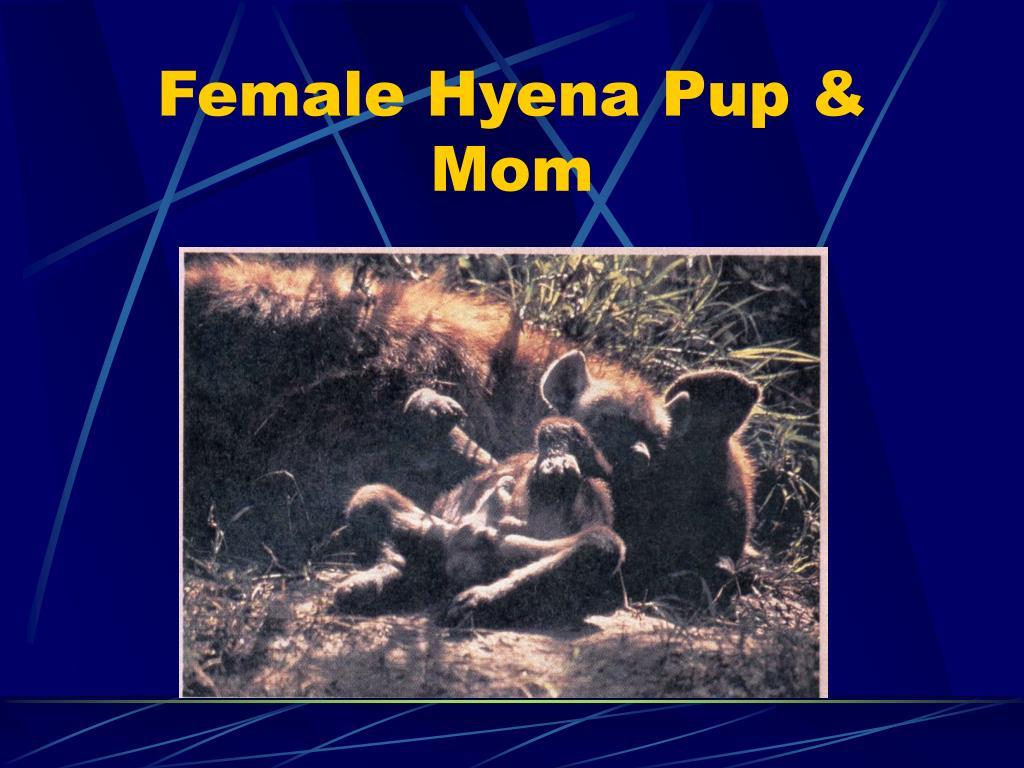 Female Hyena Pup & Mom