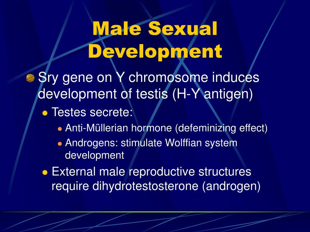Male Sexual Development