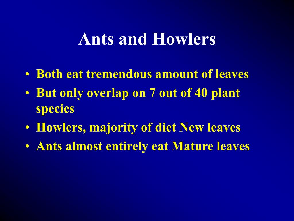 Ants and Howlers
