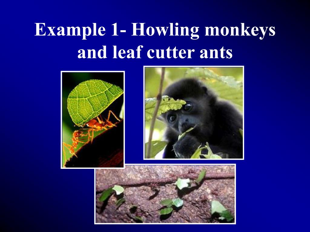 Example 1- Howling monkeys and leaf cutter ants