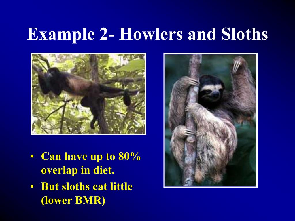 Example 2- Howlers and Sloths
