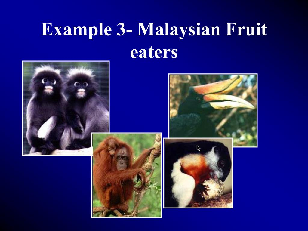 Example 3- Malaysian Fruit eaters