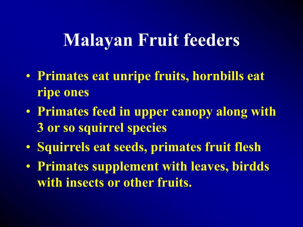 Malayan Fruit feeders