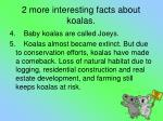 2 more interesting facts about koalas