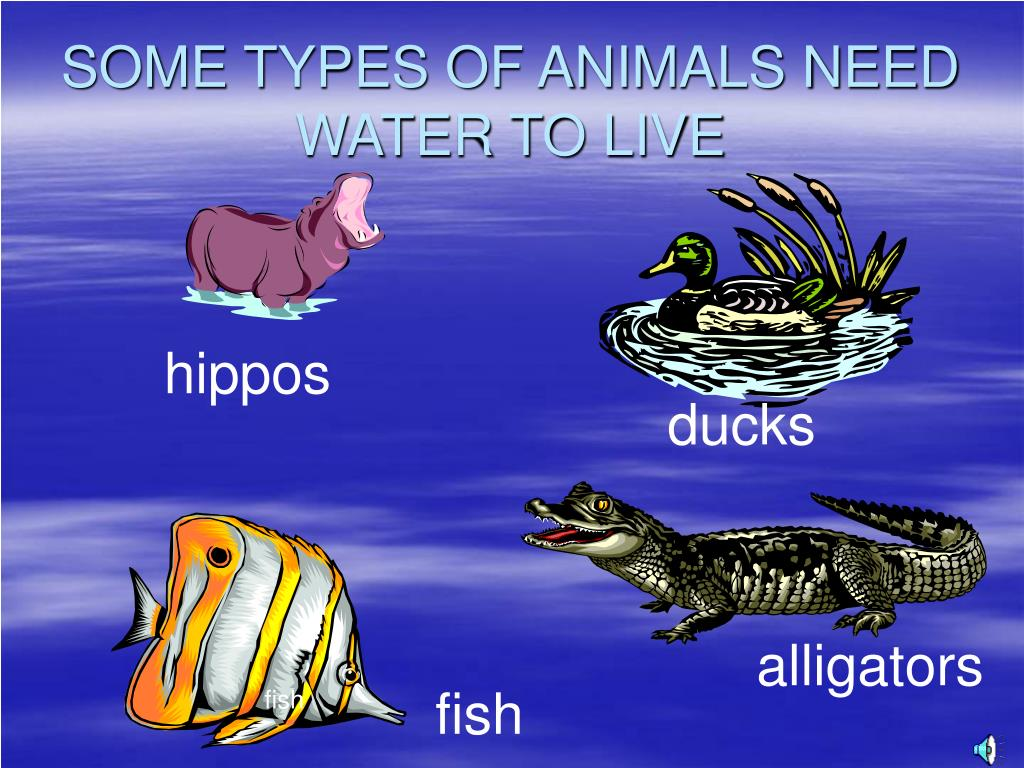 SOME TYPES OF ANIMALS NEED WATER TO LIVE