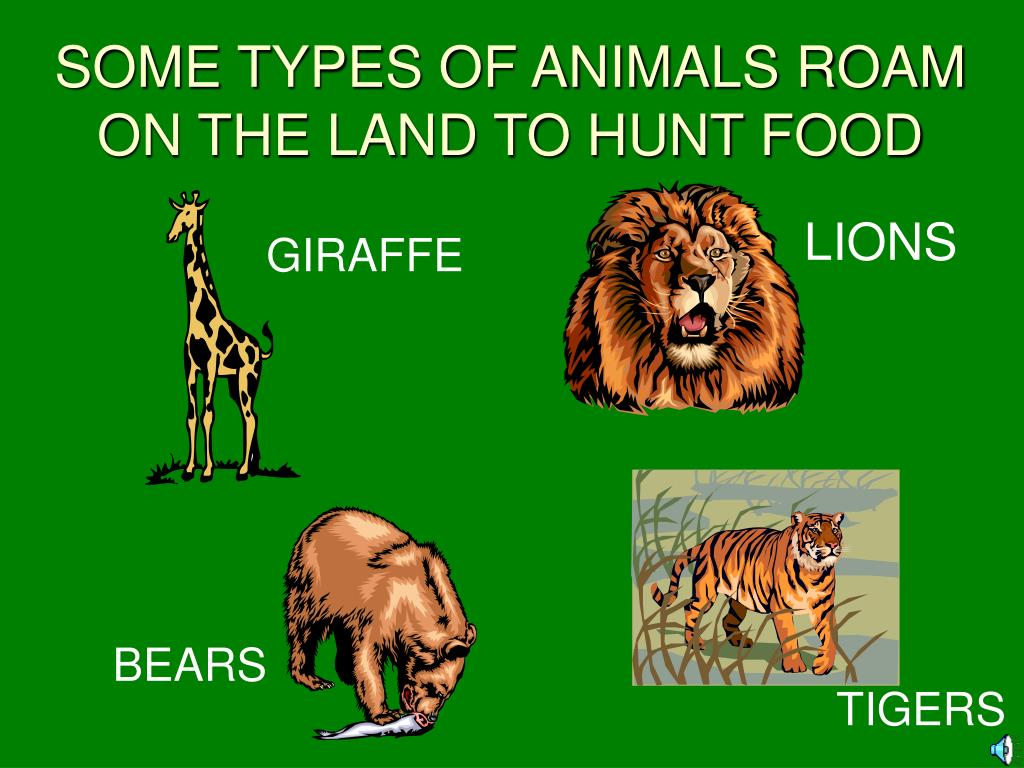 SOME TYPES OF ANIMALS ROAM ON THE LAND TO HUNT FOOD