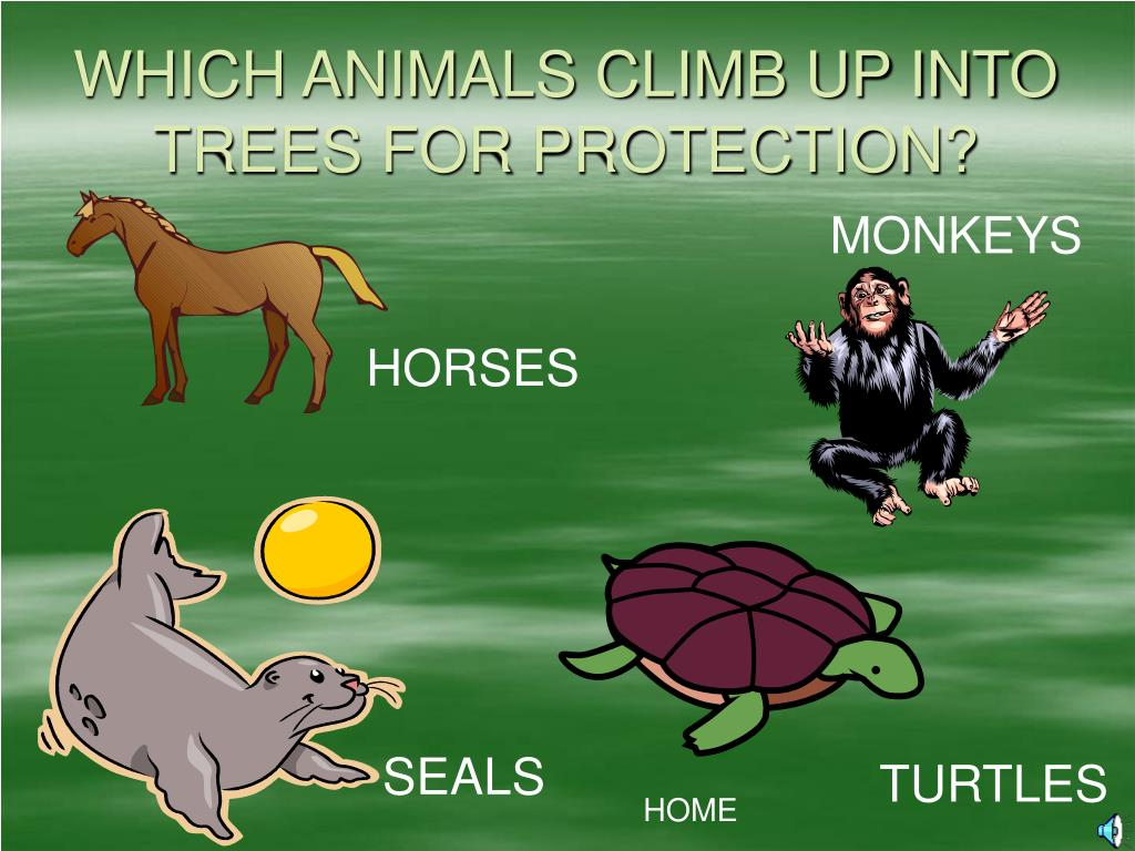 WHICH ANIMALS CLIMB UP INTO TREES FOR PROTECTION?