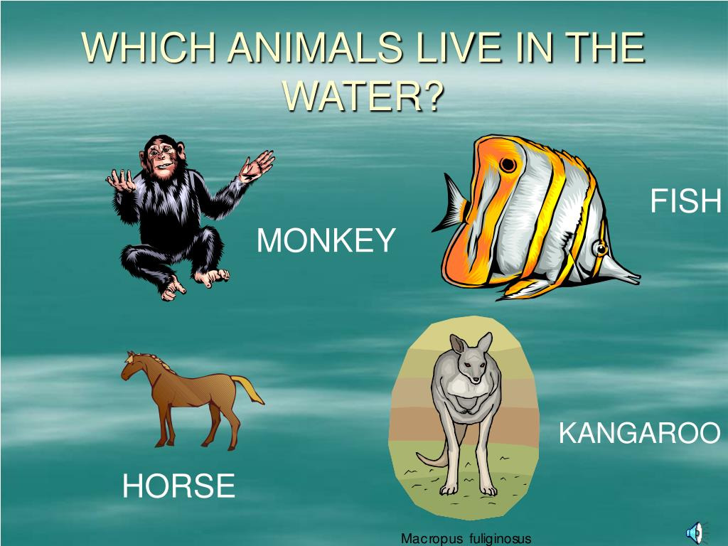 WHICH ANIMALS LIVE IN THE WATER?