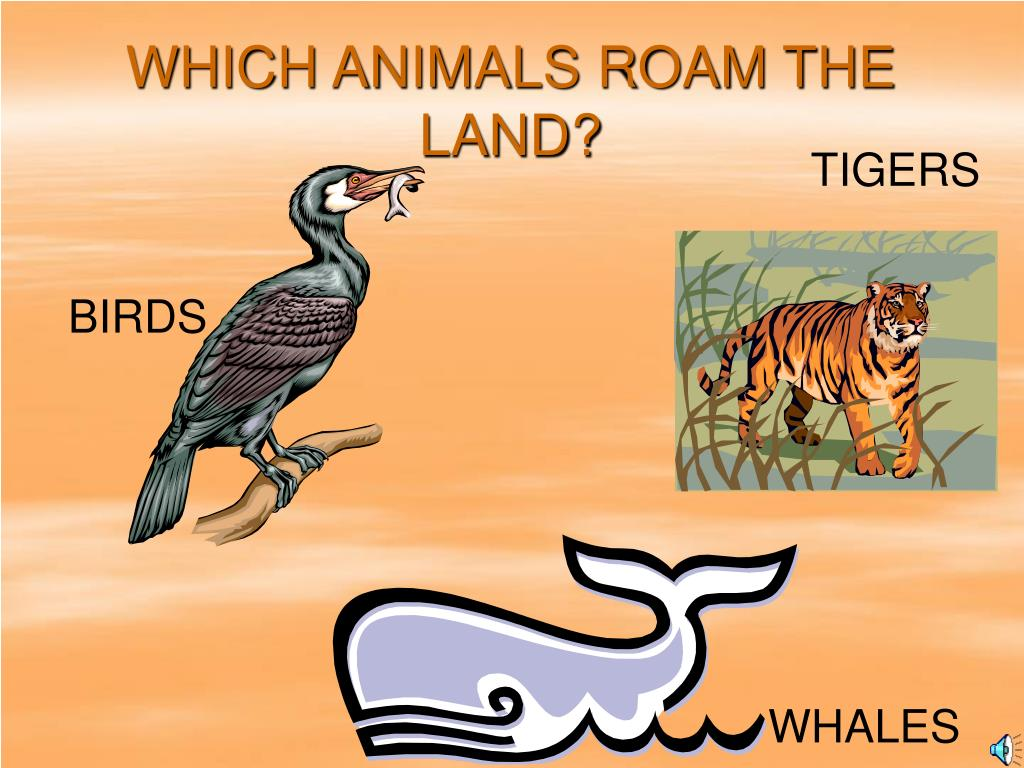 WHICH ANIMALS ROAM THE LAND?