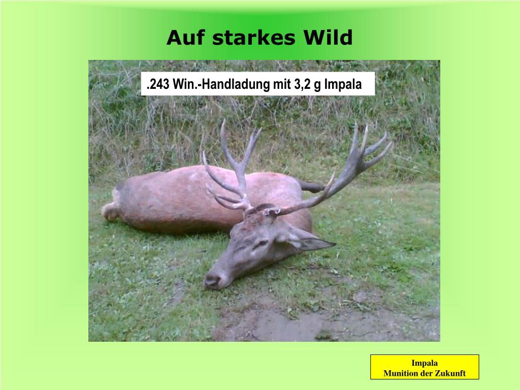 Auf starkes Wild