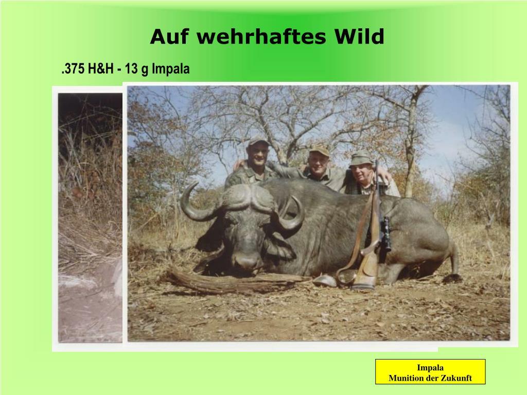 Auf wehrhaftes Wild