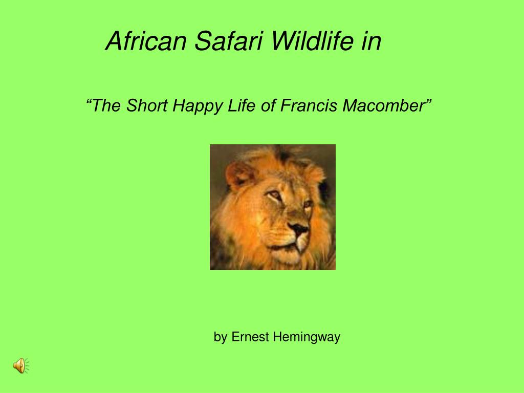 African Safari Wildlife in