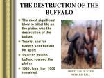 the destruction of the buffalo