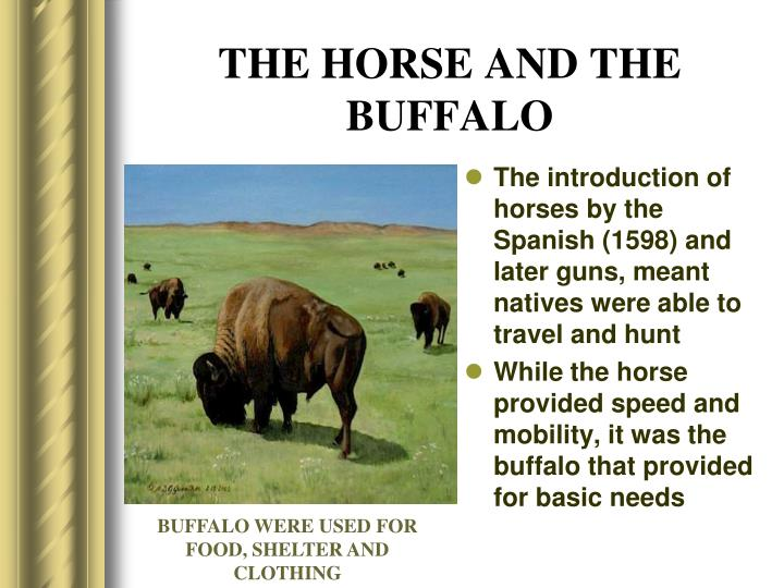 THE HORSE AND THE BUFFALO