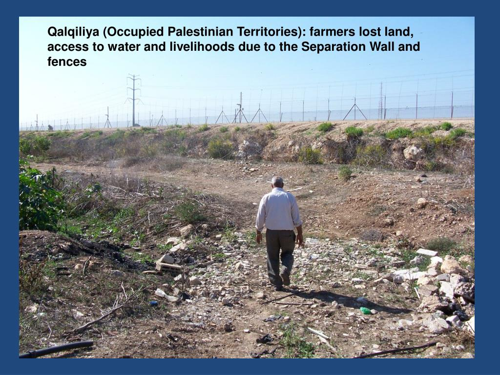 Qalqiliya (Occupied Palestinian Territories): farmers lost land, access to water and livelihoods due to the Separation Wall and fences