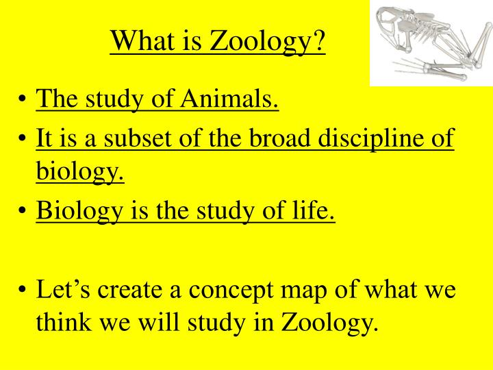 What is Zoology?