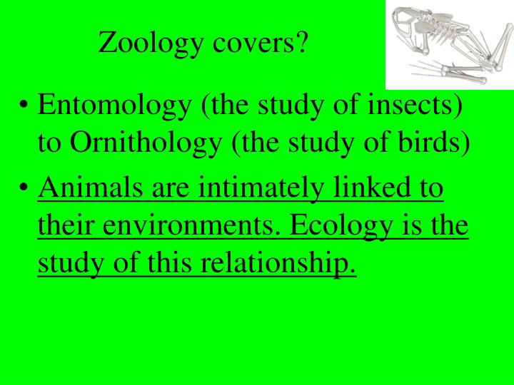Zoology covers?