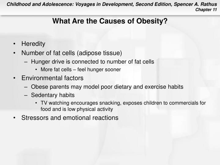 What Are the Causes of Obesity?