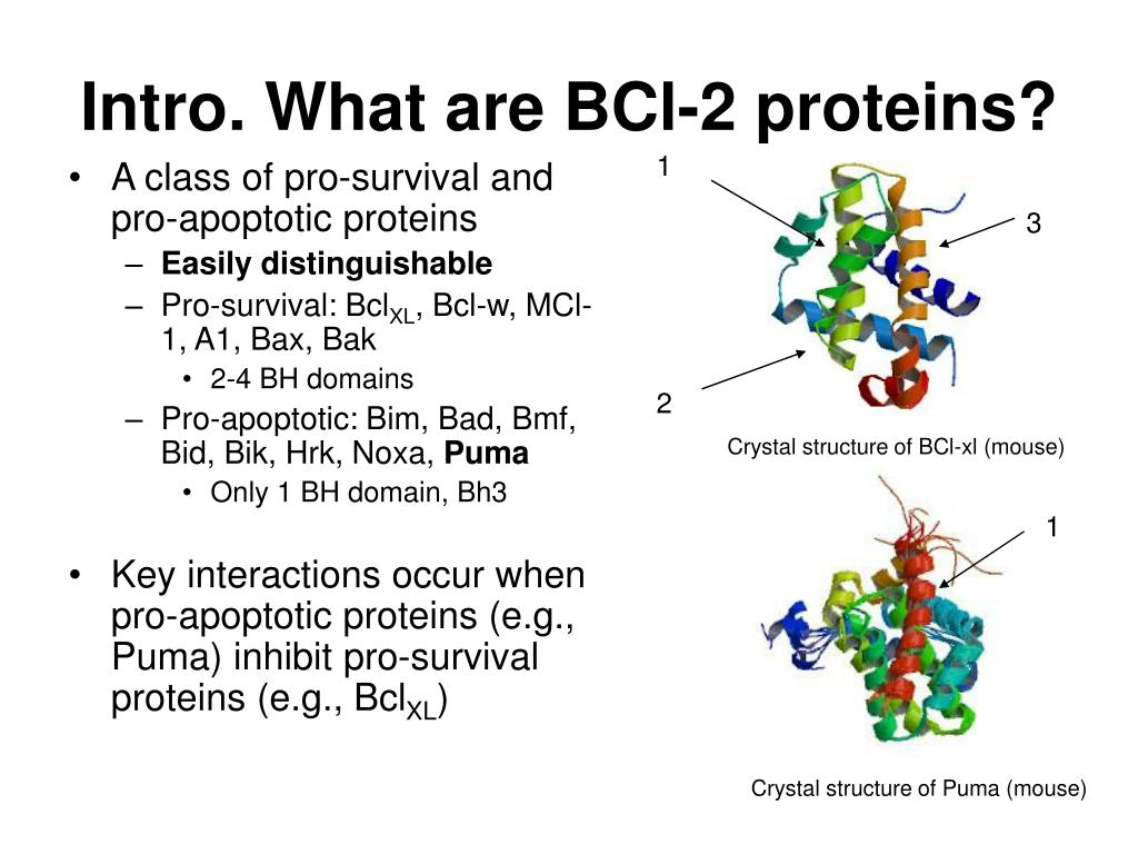 Intro. What are BCl-2 proteins?