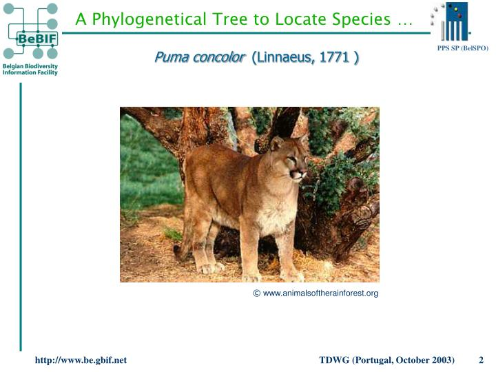 A Phylogenetical Tree to Locate Species …