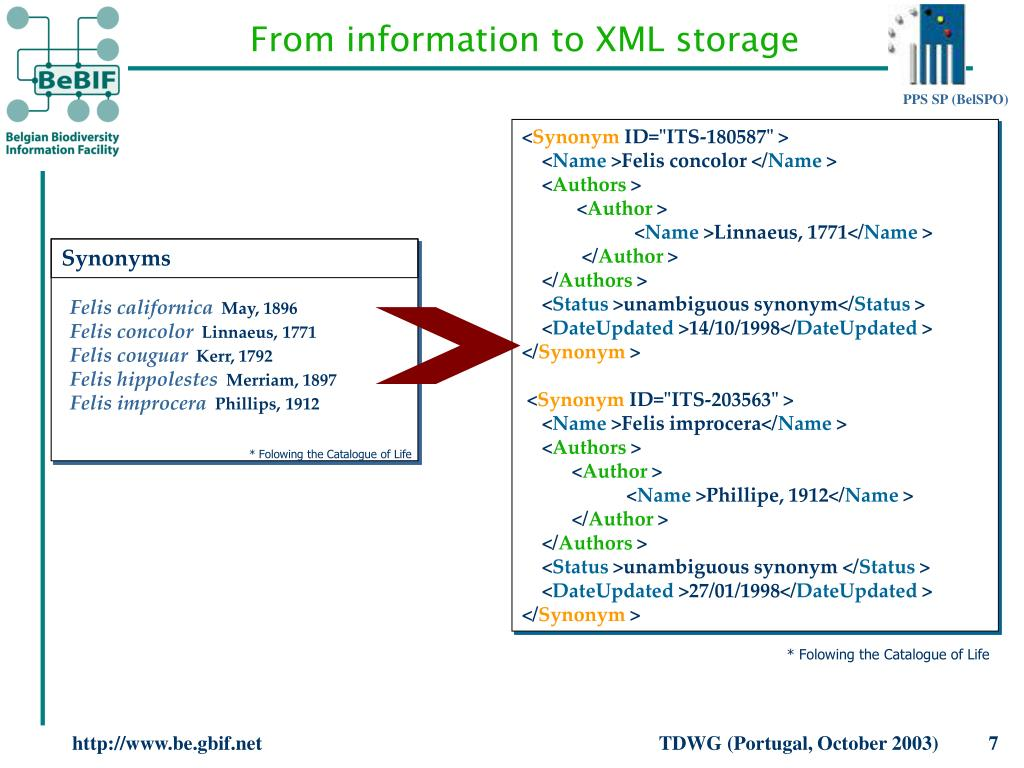 From information to XML storage