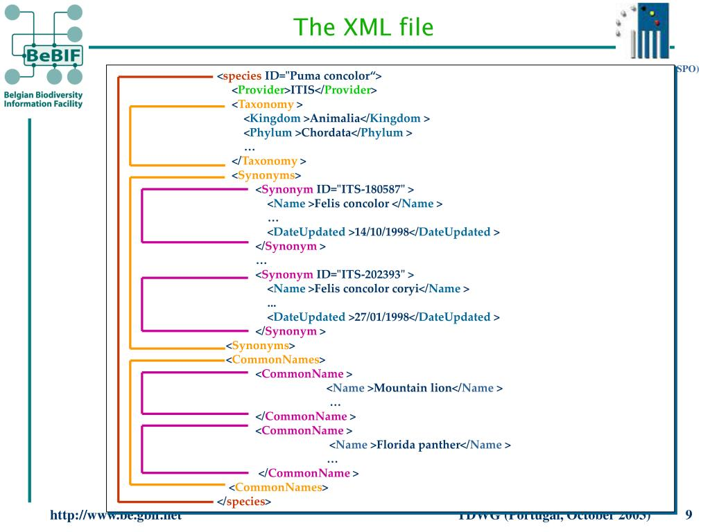 The XML file