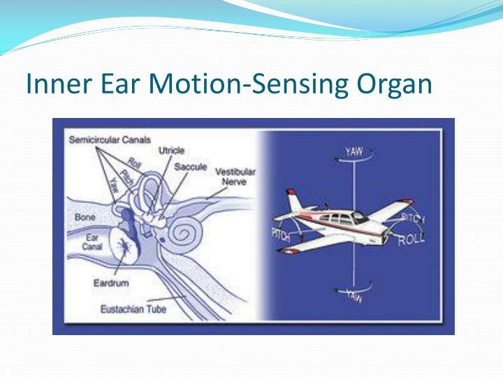 Inner Ear Motion-Sensing Organ
