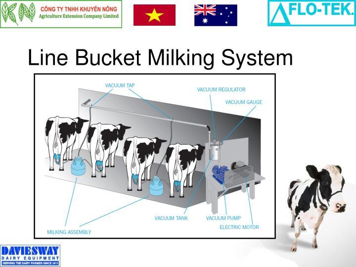 Line Bucket Milking System