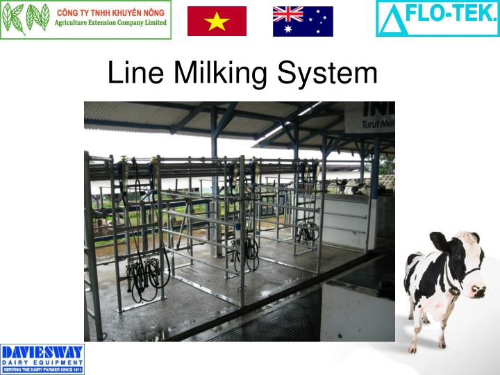 Line Milking System