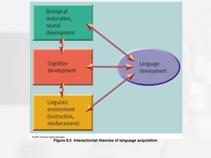 Figure 8.5  Interactionist theories of language acquisition