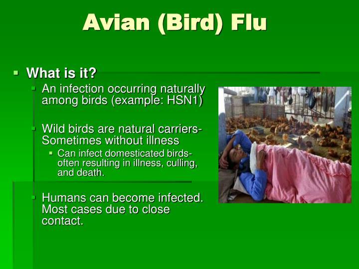 Avian (Bird) Flu