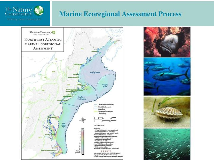 Marine Ecoregional Assessment Process