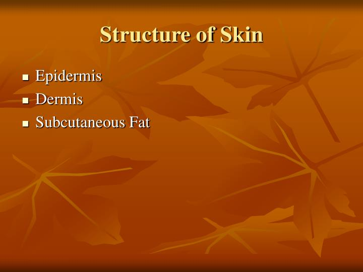 Structure of Skin
