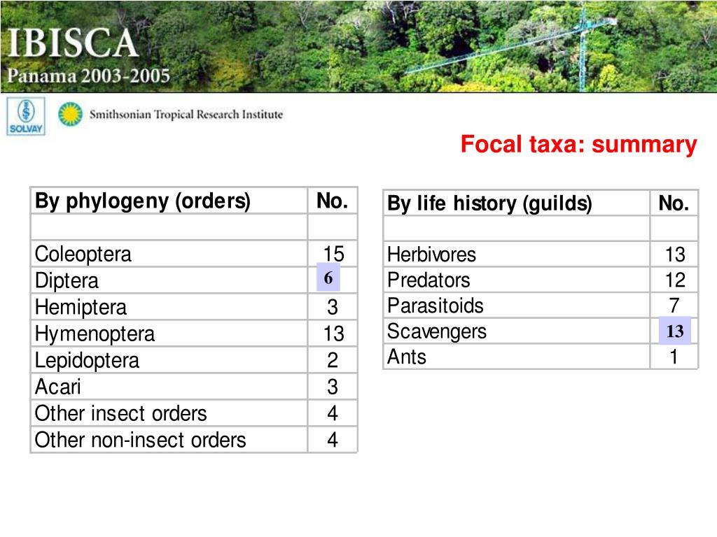 Focal taxa: summary