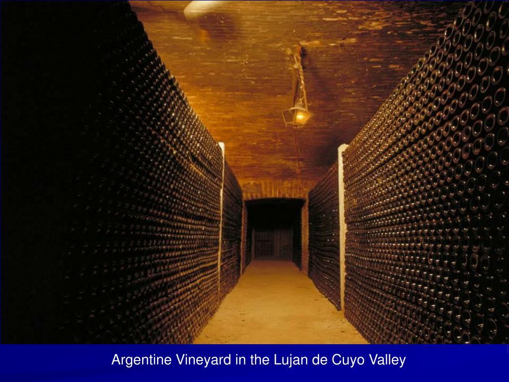 Argentine Vineyard in the Lujan de Cuyo Valley
