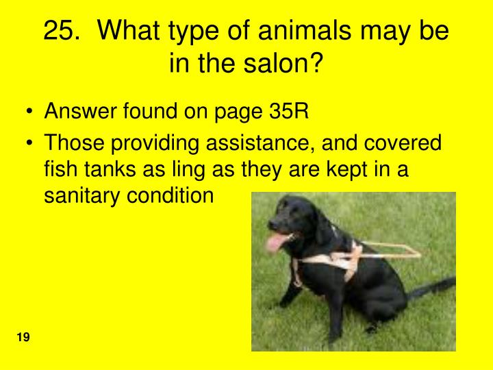 25.  What type of animals may be in the salon?