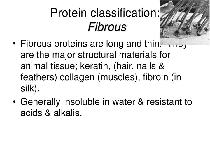 Protein classification: