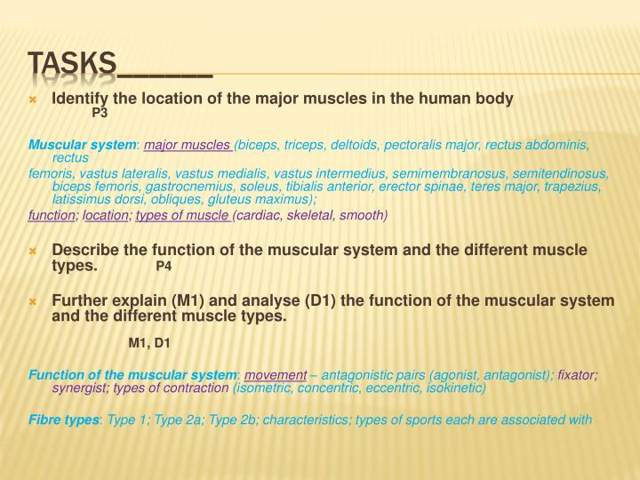 Identify the location of the major muscles in the human body