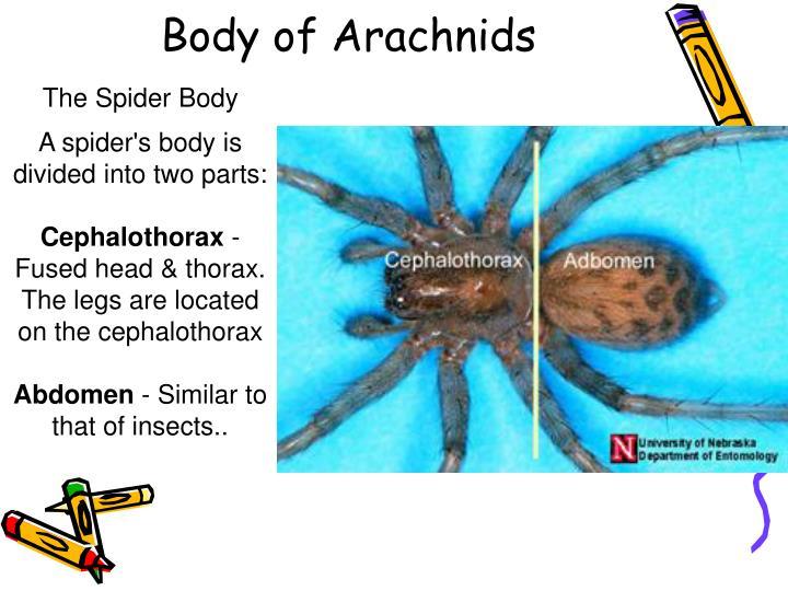 Body of Arachnids