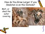 how do you grow larger if you skeleton is on the outside