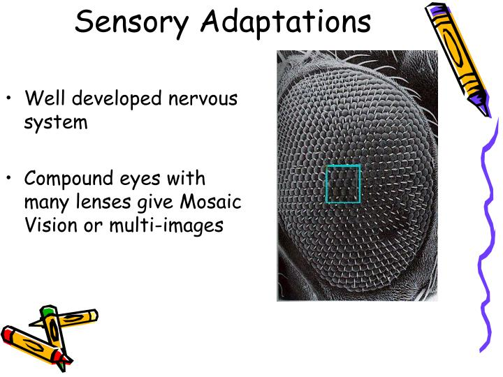 Sensory Adaptations