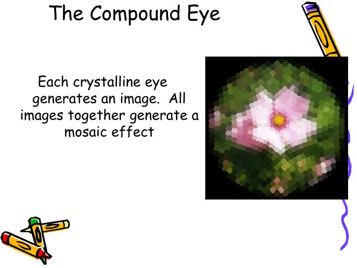 The Compound Eye
