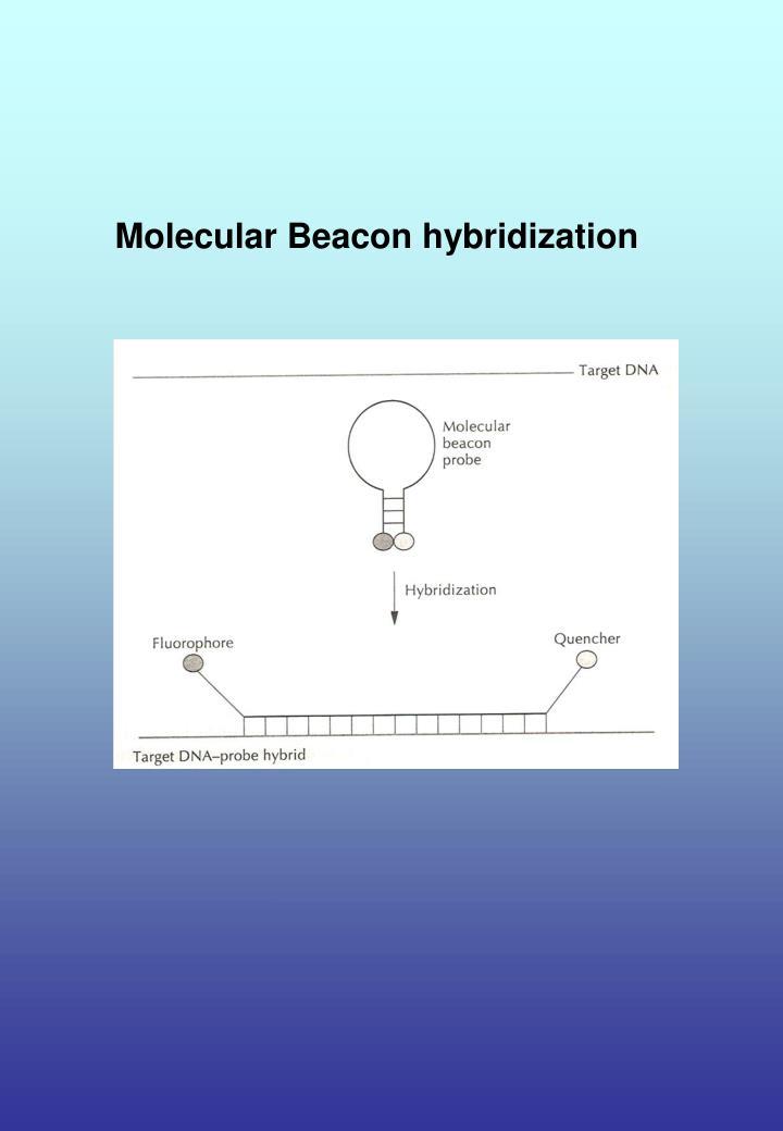 Molecular Beacon hybridization