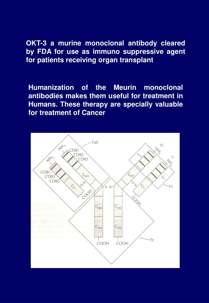 OKT-3 a murine monoclonal antibody cleared by FDA for use as immuno suppressive agent for patients receiving organ transplant