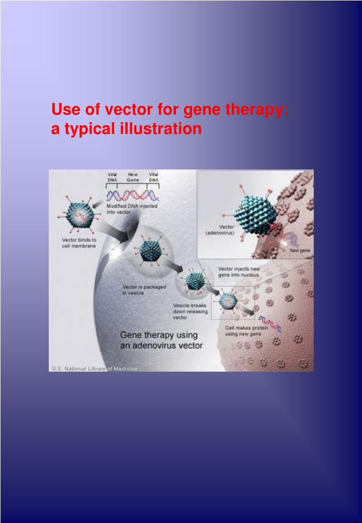 Use of vector for gene therapy: a typical illustration
