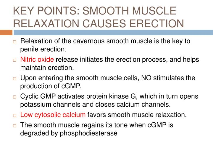 KEY POINTS: SMOOTH MUSCLE RELAXATION CAUSES ERECTION
